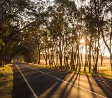 Powercor conducts major bushfire mitigation works in Victoria